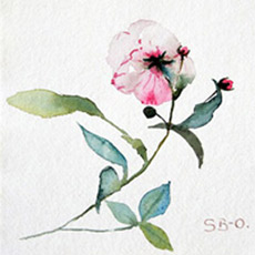 Flower and Plant paintings